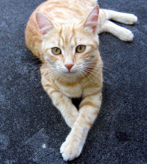 cat tomcat rest