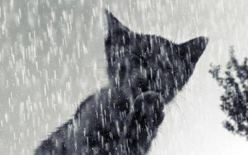 cat tomcat kitten
