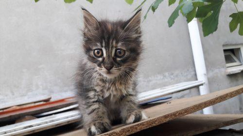 cat kittens tiny