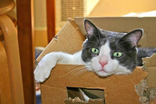 cat carton cute