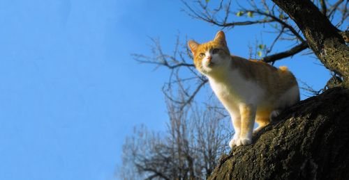 katė,Tomcat,medis