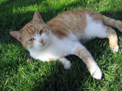 cat tomcat breather