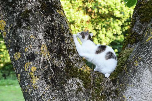 cat tree scratch