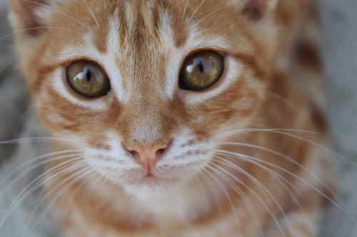 cat wrap eyes