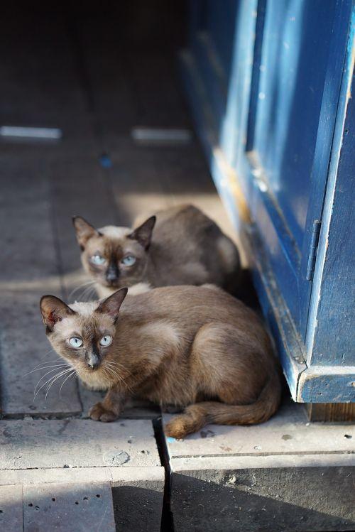 cat friends asia
