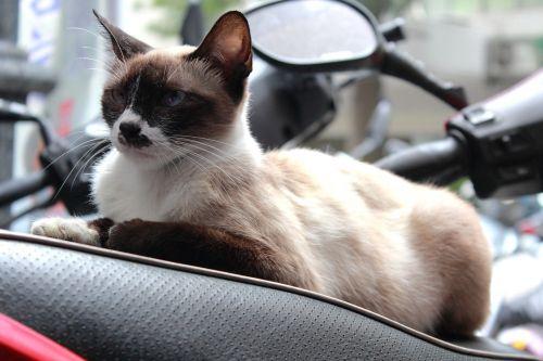cat sit wildlife