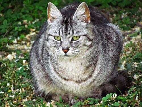cat kitten domestic cat