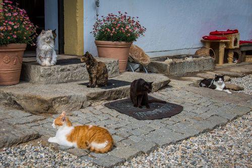 katė,naminis gyvūnėlis,kačiukas,naminis katinas,mieze,gyvūnų prieglauda