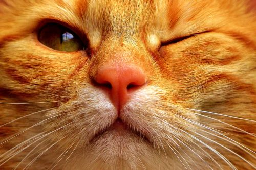 cat mackerel wink