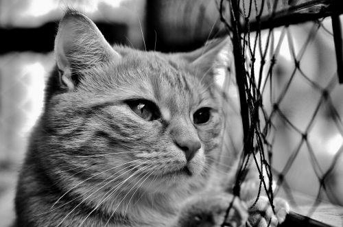 cat mackerel longing