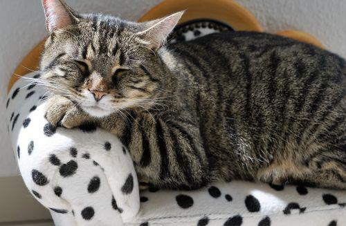cat sofa canape