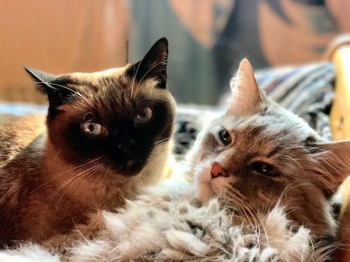 cat pair animals
