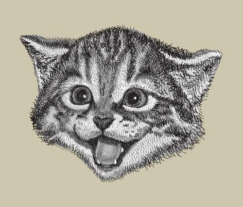 cat drawing hand drawn