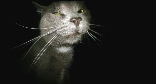 cat funny stalker