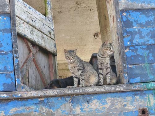 cat pets window