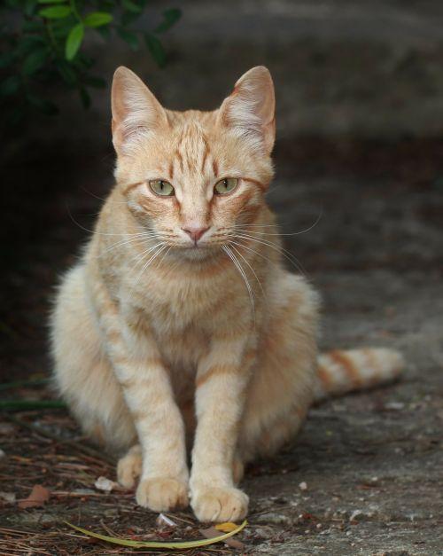 cat young cat pet