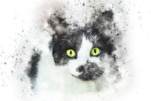 cat pet art