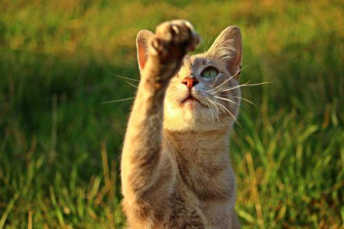 cat kitten paw