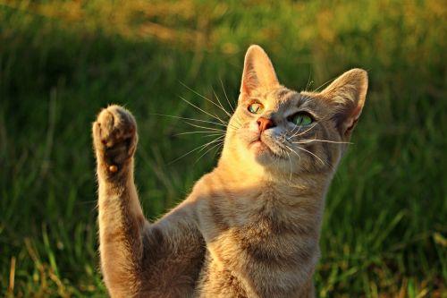 cat mackerel paw