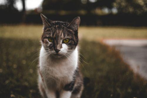 cat green green eyes