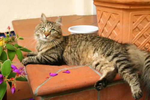 katė,mieze,skumbrė,palydovas žiūrėjo,pagrindinė dalis,mielas
