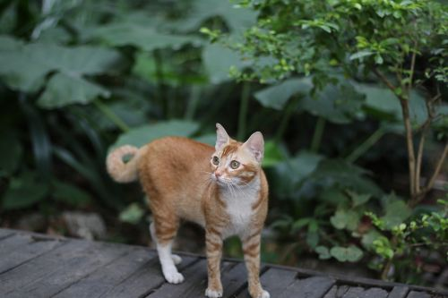 cat stray cats chinese pastoral cat