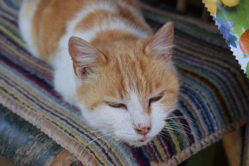 cat lovely orange