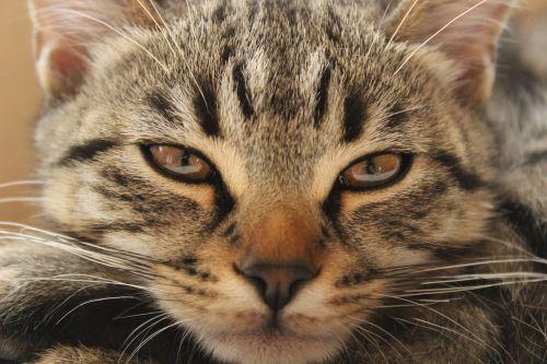 katė,nuobodulys,radwasabry,žiūrėti,nuobodžiaujantis