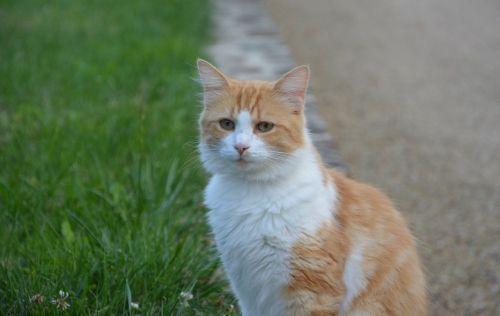 cat look green eyes