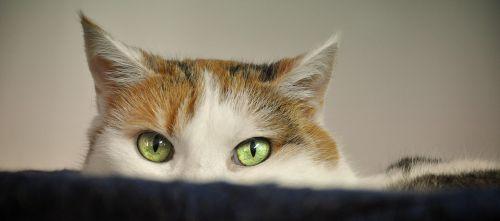 cat animal shelter scheu
