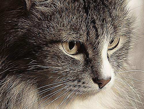 cat graphic photo