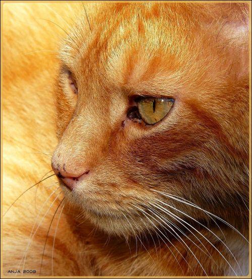 cat cat portrait domestic cat