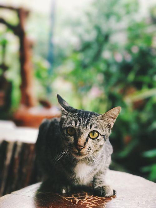 cat pussycat pets