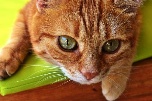 cat mackerel photograph