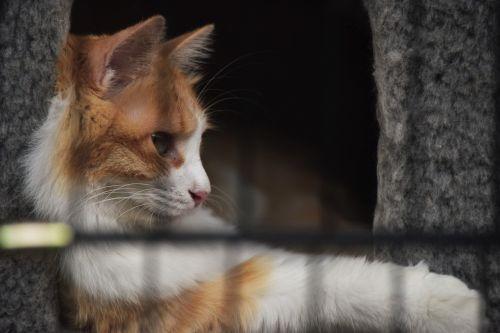 cat pets quiet