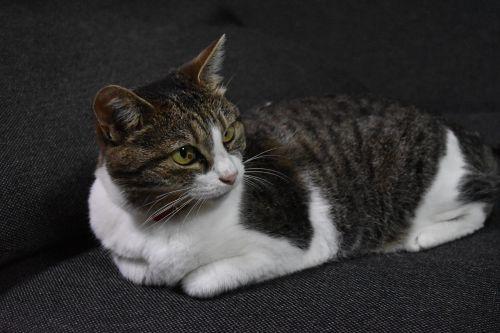 cat calico sit down