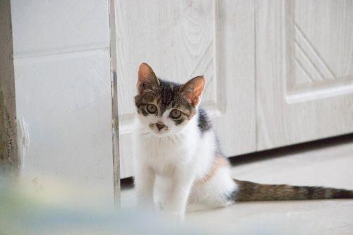 cat lurking kitten