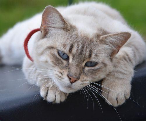 cat cat lying tranquil