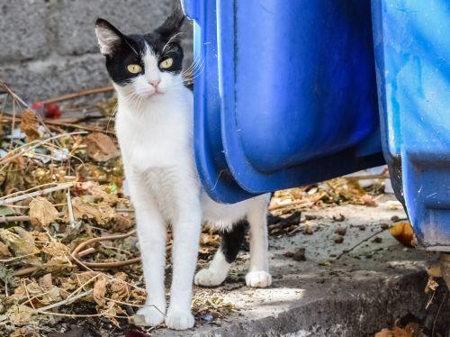 cat stray tramp