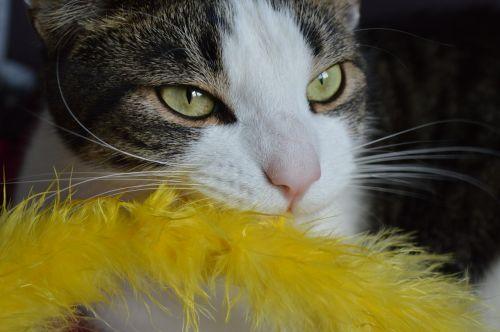 cat playful kitty