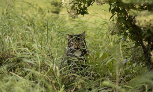 cat grass bush