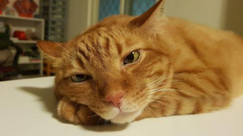 cat misanthropy bored