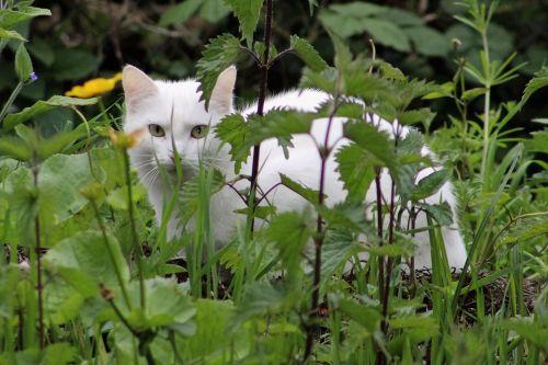 cat pet hiding
