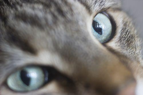 cat eye pets