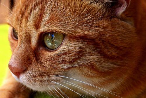 cat mackerel wildlife photography