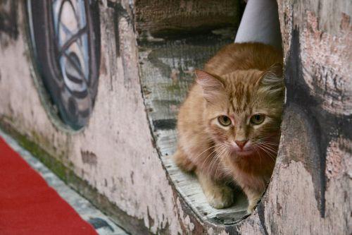 cat tomcat street