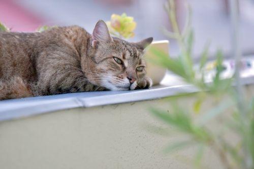 cat rest animals