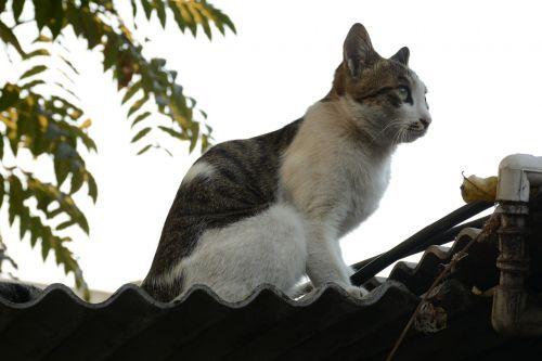 cat tabby cat fat cat