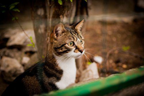 cat looks dachowiec