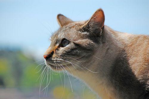 cat tabby profile
